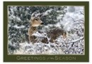 HP14309 Woodland Visitor Holiday Card